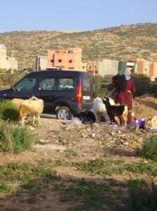 Chiens, Biches, moutons et ordures