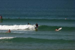 Session Surf Longboard